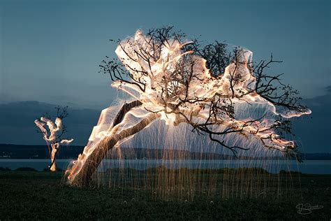 mesmerizing photos mesmerizing photos of light dripping from trees by vitor schietti cube breaker