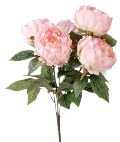 fiori di bush fioreproibito peonie bush x 12 fiori