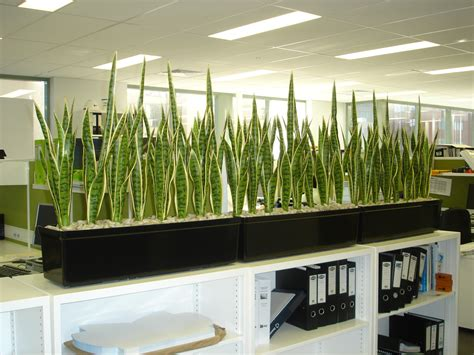 artificial plants for office desk artificial plants mother in law tongue australian