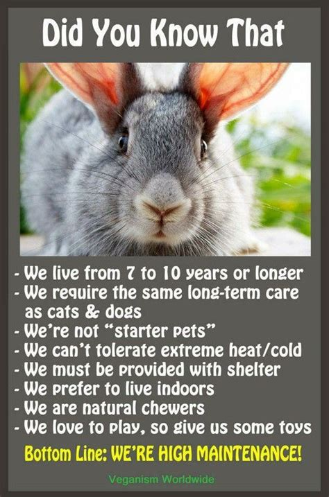 7 Facts On Bunny Rabbits by About Rabbits Poster Facts And Tidbits