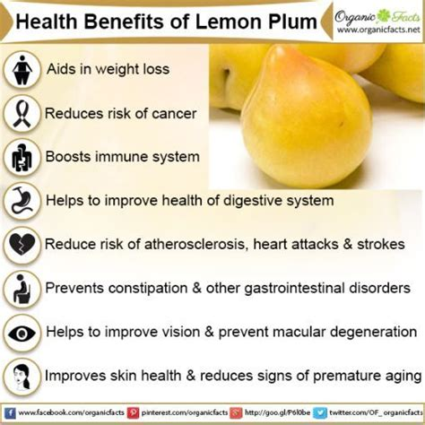 Plumb Benefits by 1000 Ideas About Plum Benefits On Plum Health