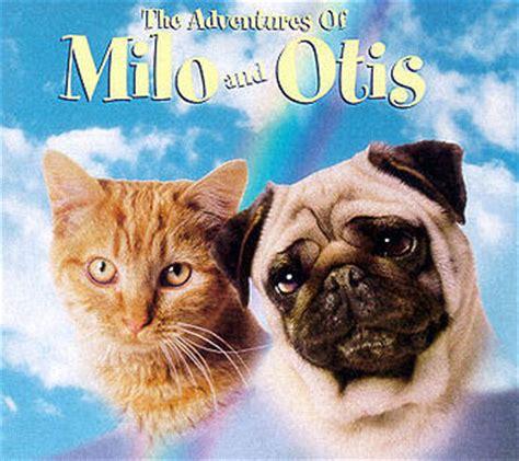 milo the pug milo and otis images milo and otis pics wallpaper and background photos 30503389