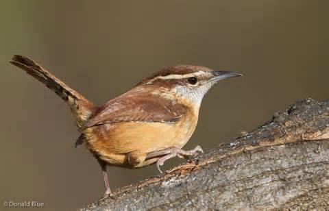 Bird In Backyard by Small Backyard Birds