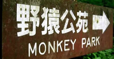 japan snow monkeys info, directions, tours, maps, hotels