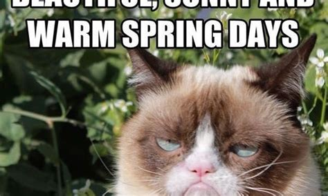 Spring Meme - 15 funny spring memes to get you through these chilly quot spring quot days