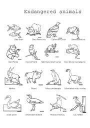 printable endangered animal fact sheets english worksheet endangered animals pictionary