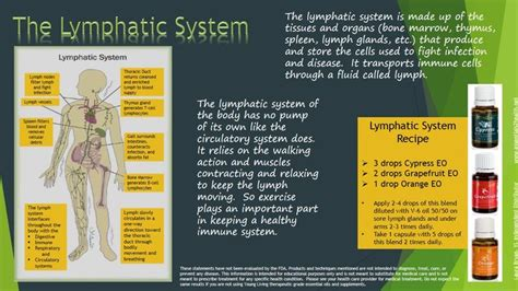 Essential Oils For Lymph Detox by 17 Best Images About Lymphatic System On