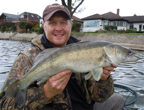 thames river fishing predators on the river thames by lee chatfield gardner