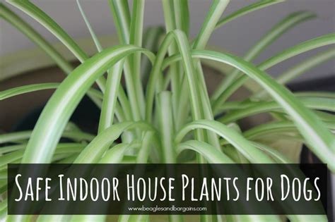 poisonous house plants to dogs non toxic indoor house plants for dogs colors it is and indoor
