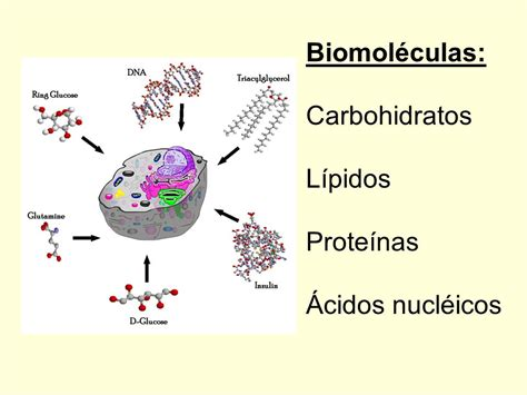 proteinas y lipidos biomol 233 culas ppt descargar