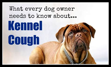 kennel cough symptoms in puppies kennel cough in dogs symptoms diagnosis treatment