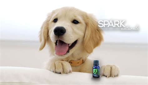 essential oils and dogs essential oils dogs spark naturals