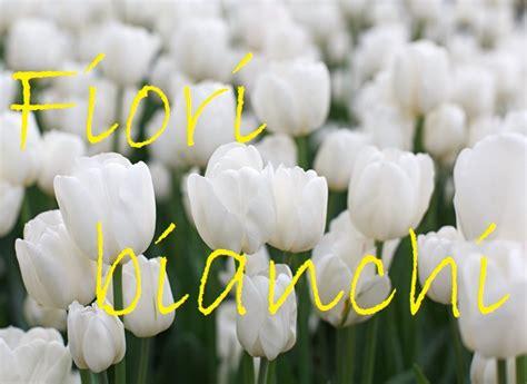 fiori bianchi nomi fiori bianchi nomi caratteristiche origine immagini