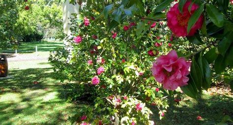 piante e fiori da giardino fiori da giardino piante per giardino variet 224 fiore