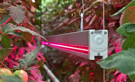 Grow Light Fixtures Philips Horticultural Led Commercial Lighting Products