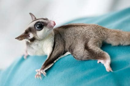 small exotic pets | lovetoknow