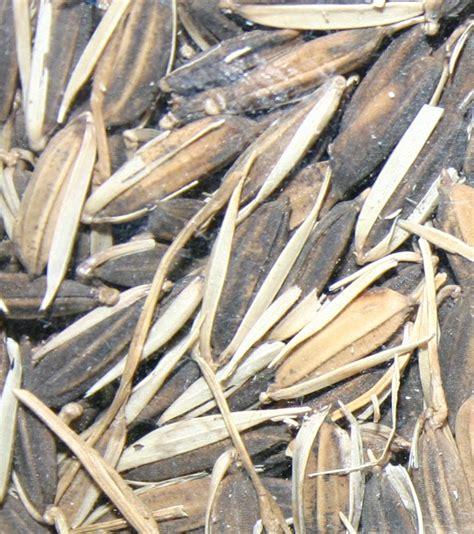 whole grains wiki whole grain
