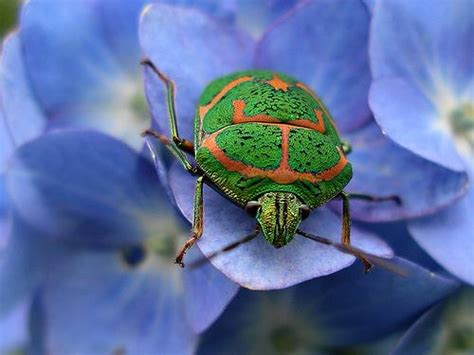 88 best images about bug on