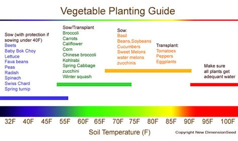 Seeds Asian Vegetable Gardening The Easy Way Vegetable Gardening Guide