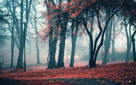 imagenes arboles otoño oto 241 o parque 193 rboles hojas fondos de pantalla oto 241 o