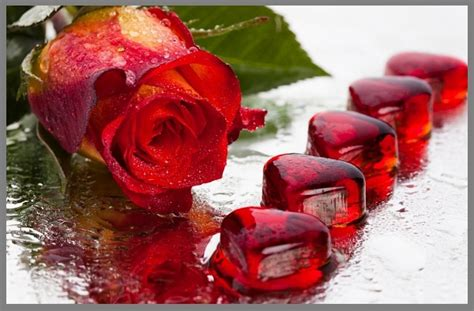 imagenes rosas rojas amor the gallery for gt pensar en ti frases