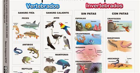 imagenes animales vertebrados e invertebrados para imprimir recursos primaria esquema sobre los animales vertebrados