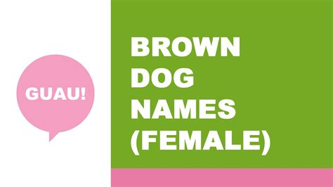 names for brown dogs names for brown the best names for your pet www namesoftheworld net