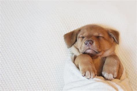 newborn puppy photoshoot joelea mcdonald s newborn puppy photoshoot is much cuteness to handle metro news