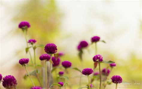 wallpaper with flowers purple garden flowers wallpapers hd wallpapers