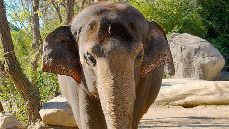 Cincinnati Zoo Botanical Garden Cincinnati Oh Cincinnati Zoo And Botanical Garden In Cincinnati Ohio Expedia