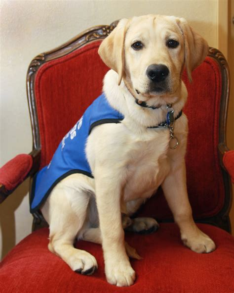 service dogs california giving back la jolla cosmetic surgery centre