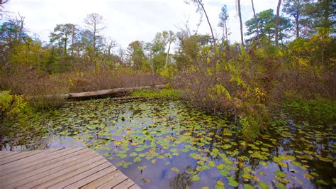 houston arboretum map image gallery houston memorial arboretum