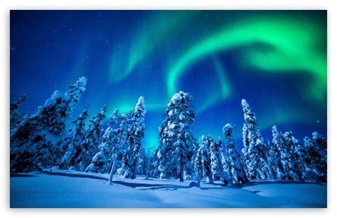 northern lights  forest winter  hd desktop