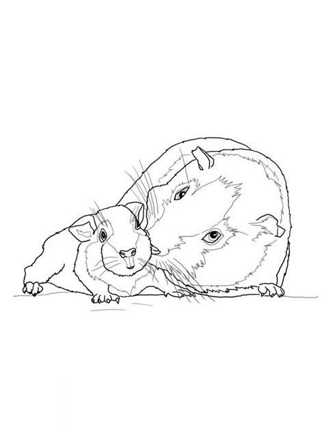 guinea pig coloring pages az coloring pages