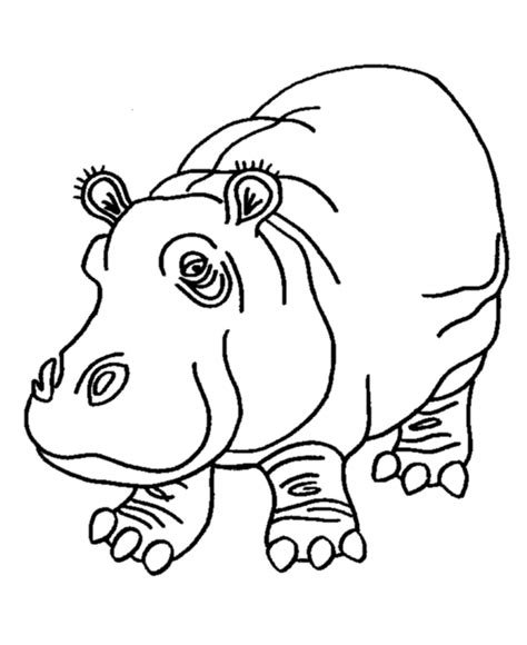 hippo pictures coloring home