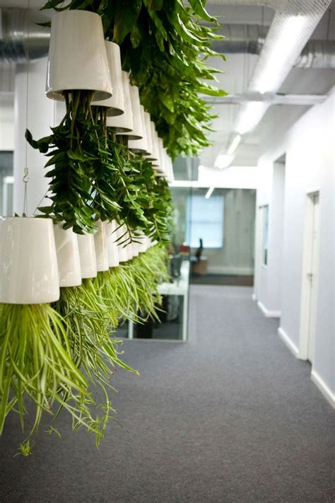 pflanzen fuers buero bessere raumluft durch zimmerpflanzen