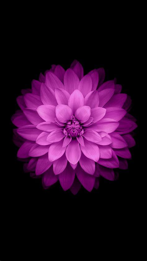 wallpaper for iphone 6 plus flower beautiful lotus iphone 6 wallpaper 123mobilewallpapers com