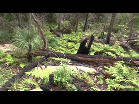 great north walk sections bushwalking the great north walk part 01 hitting the