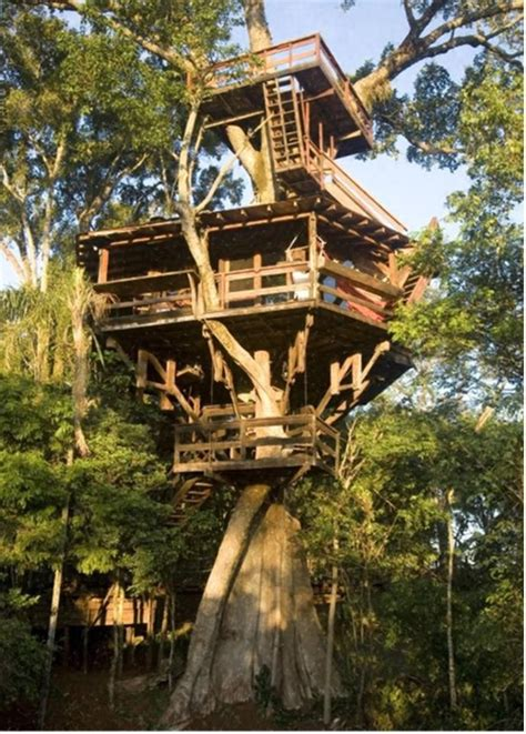real life treehouse 25 best ideas about treehouse builders on pinterest