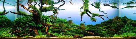 aquascape snail indonesia aquaticscapers contest winner aquajaya