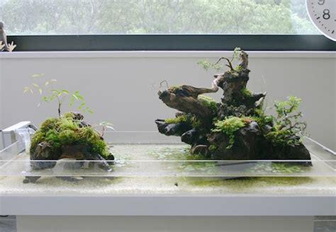 aqua terrarium designs aqua and terrarium on