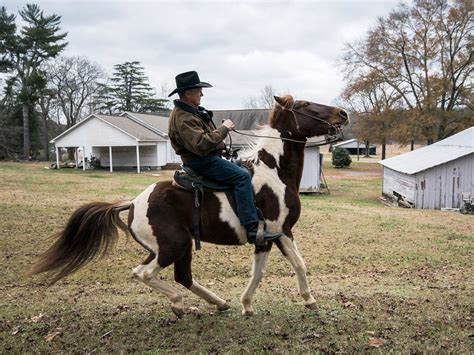 roy moore horse twitter roy moore s horse riding skills top this week s internet