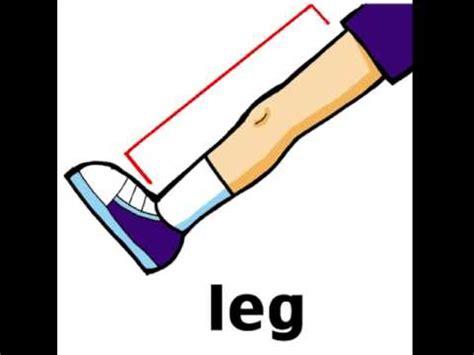 pierna en inglés youtube