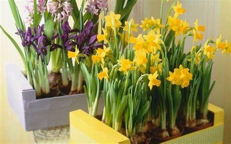 coltivazione fiori coltivazione bulbi piante in giardino bulbi coltivazione