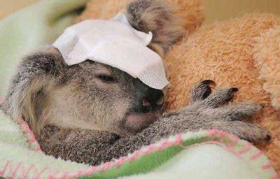 Harga Tas Merk Koala foto gambar tas tas koala