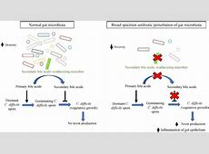 Frontiers   The Human Gut Microbiome – A Potential ... C. Difficile Diet