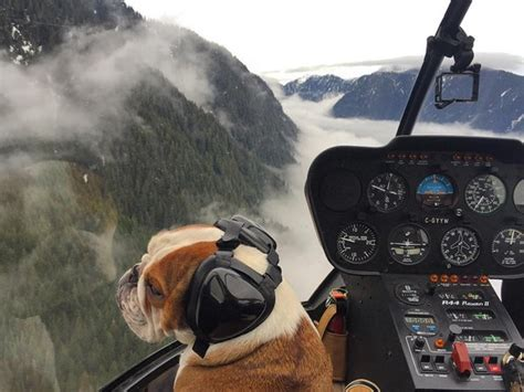 pilot dogs this wilderness helicopter pilot and his trusty co pilot the best