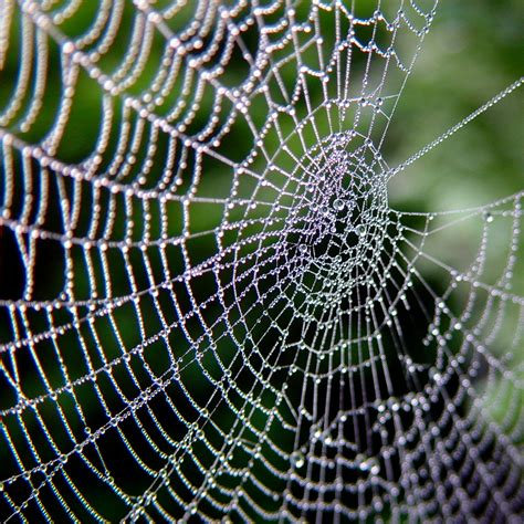 pattern and structure found in nature file spiderweb jpg wikimedia commons