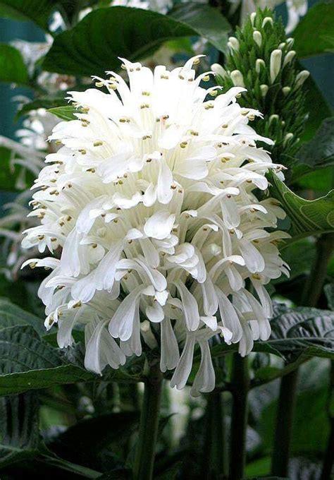 nomi di fiori rari oltre 25 fantastiche idee su fiori rari su