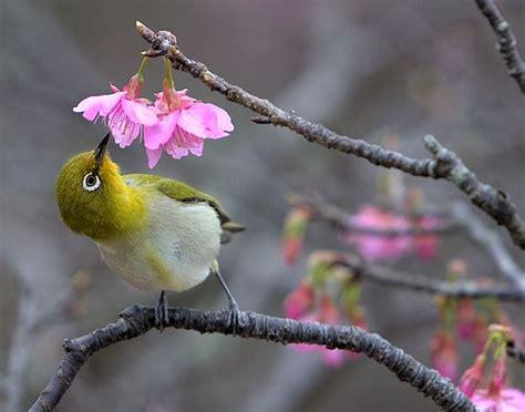 nectar birdie birds bird pinterest